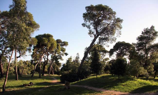 δάσος συγγρού