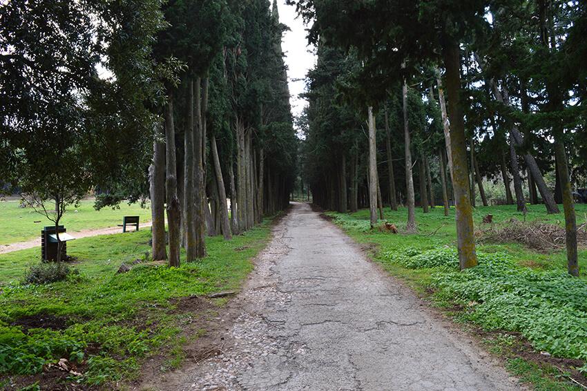 τατόι δάσος
